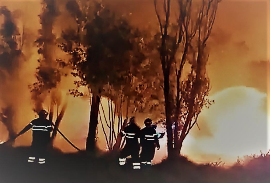 Xochimilco: Se registra incendio en Parque Ecológico Cuemanco; piden evitar la zona
