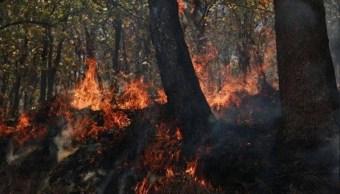 Combaten siete incendios forestales en Chiapas