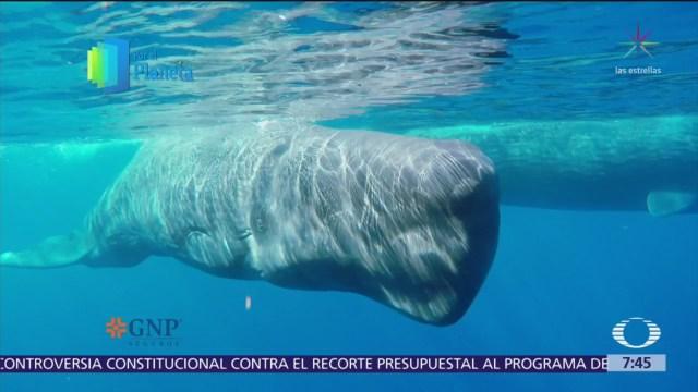 La ballena, imponente gigante del mar