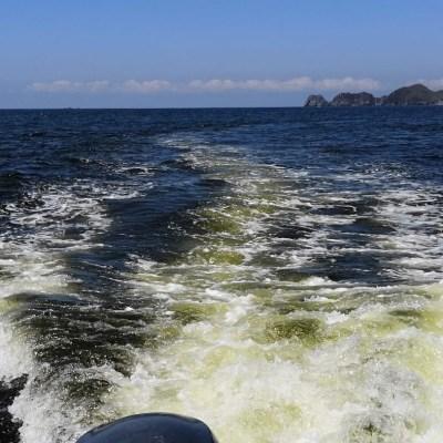 Detectan presencia de marea roja no tóxica en Manzanillo, Colima