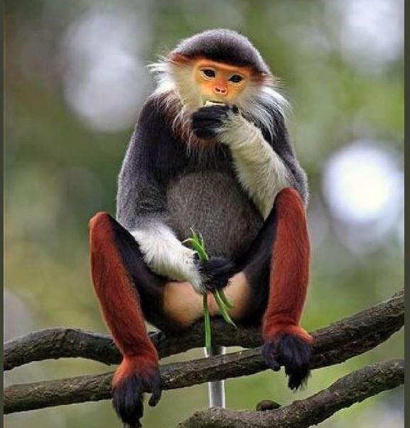 Asesinan a mono y lo transmiten por Facebook; ahora irán a prisión