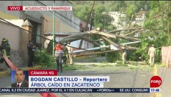 Foto: Se desploma árbol de más de 15 metros en calles de Zacatenco