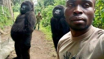Foto: Mathieu Shamavu posa para una selfie con dos gorilas en el Parque Nacional Virunga, en Congo. El 18 de abril de 2019