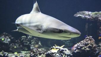 Foto Tiburón Tortuga 25 Abril 2019