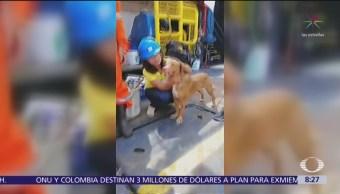 Trabajadores de plataforma petrolera rescatan a perro en Tailandia