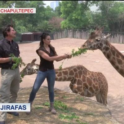 Un recorrido por el Zoológico de Chapultepec, en la CDMX