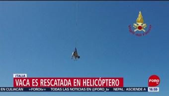 Foto: Vaca es rescatada en helicóptero en Italia