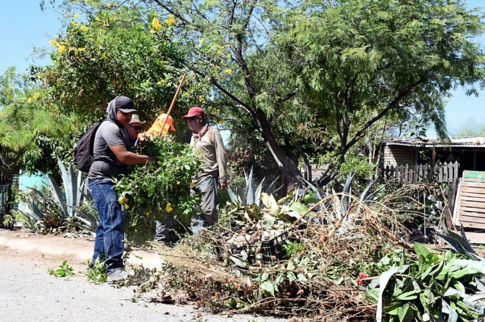 Trabajadores del Ayuntamiento de Cajeme iniciaron con acciones preventivas para erradicar las plagas de alacranes, 24 mayo 2019