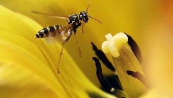 foto Las avispas son más inteligentes que las abejas, revela estudio 02 de mayo de 2013