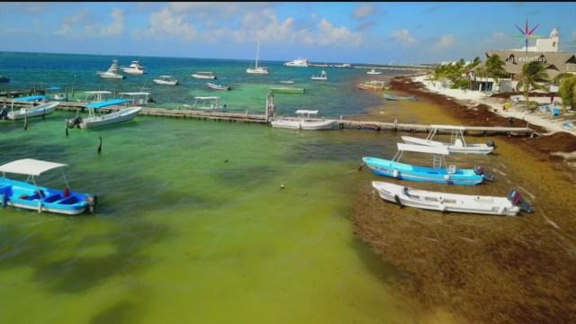 ¿Cómo enfrentar la llegada masiva de sargazo a Quintana Roo?