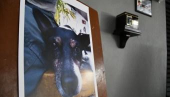 'Crucito', tus patas dejaron huellas: Bomberos de Jalisco rinden sentido homenaje a su fiel compañero