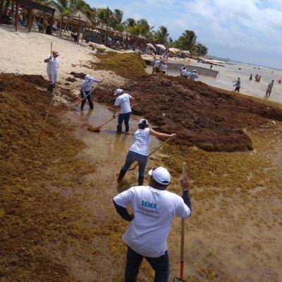 Con sargazo fabrican cosméticos, plásticos y moldes dentales en Quintana Roo