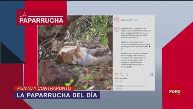 Foto: Gatos Palacio Paparrucha Del Día 29 Mayo 2019