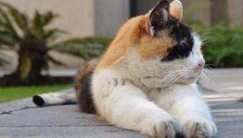 Salvemos a los históricos gatos de Palacio Nacional: Activistas
