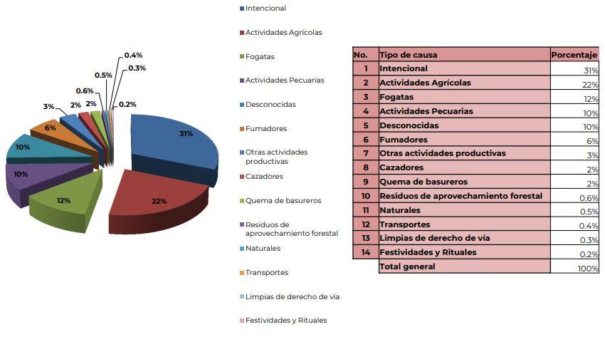 Gráfica que indica las causas de los incendios en lo que va del 2019 según el reporte semanal de incendios de la Conafor (Conafor/Captura de pantalla)