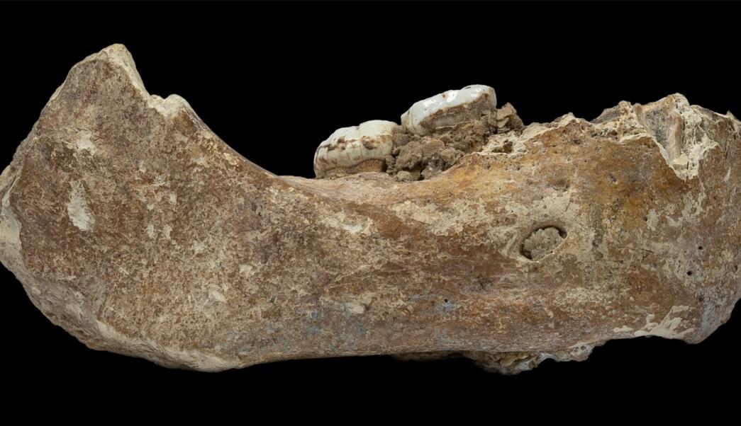 Hallan en Tibet fósil de antepasado humano de 160 mil años