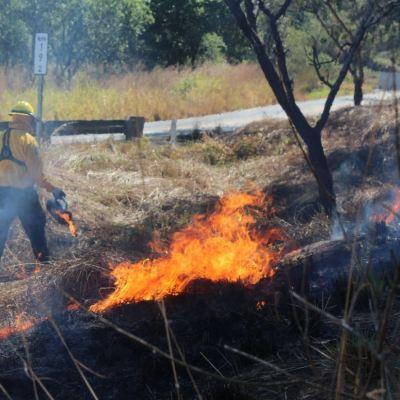 Incendio forestal consume más de 4 mil hectáreas en San Luis Potosí