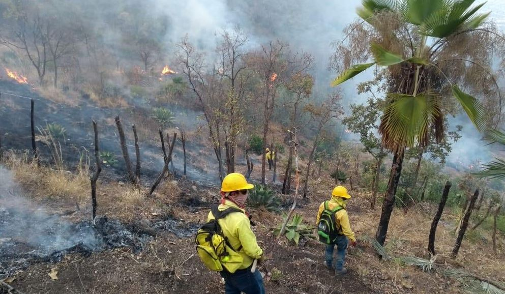"""Foto: El incendio forestal en el predio """"El Calvario"""", en Chilpancingo, está controlado, 10 mayo 2019"""