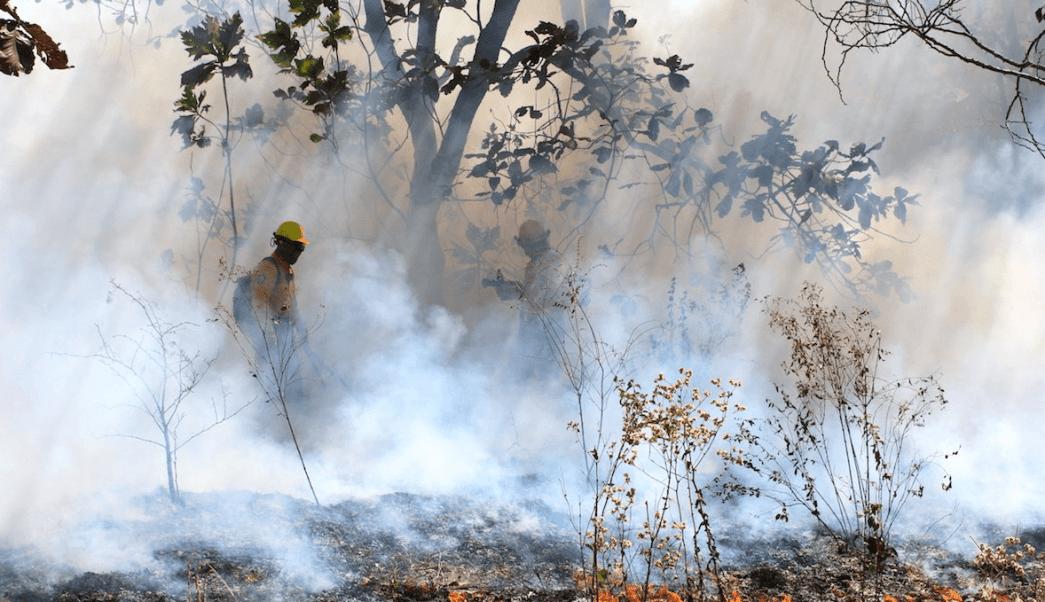FOTO Siguen incendios forestales en México, analizan bonos catastróficos (Conafor mayo 2019)