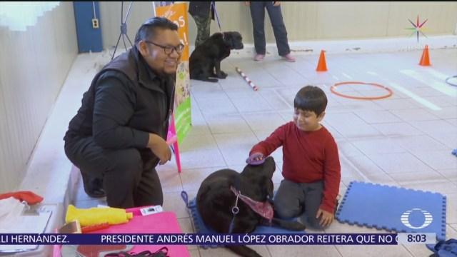 Los 'Dog Tores', terapias de movilidad para niños con discapacidad