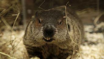 foto Muere pareja por peste bubónica tras comer marmota cruda 2 de febrero de 2018