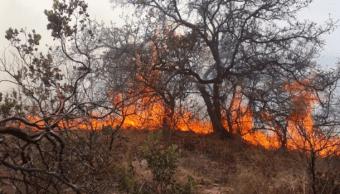 FOTO Más de 140 incendios forestales afectan gran parte de México (@CONAFOR 13 mayo 2019)