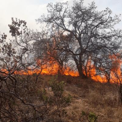 Más de 140 incendios forestales afectan gran parte de México