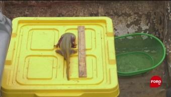 FOTO: Monjas realizan conservación de achoques en el lago de Pátzcuaro, 18 MAYO 2019