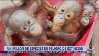 ONU advierte de próxima extinción de un millón de especies