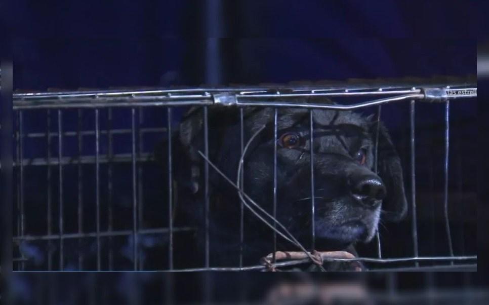 Foto: El perro mordió a una niña de 9 años de edad, 17 de mayo 2019