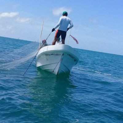 Inicia veda de camarón en Campeche y Tabasco