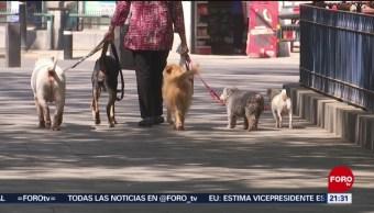 Foto: Popó Desechos Heces Mascotas Problema Salud Cdmx 3 de Mayo 2019