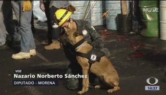 FOTO: Proponen seis años de cárcel a quienes roben mascotas