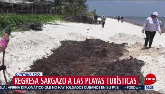 FOTO: Regresa el sargazo a playas de Quintana Roo, 1 MAYO 2019