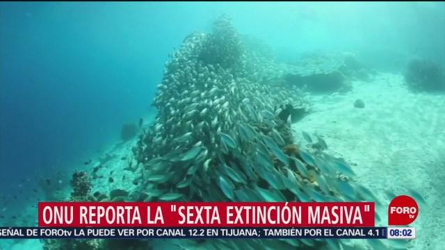 FOTO: Rumbo a la sexta extinción masiva, reporta la ONU, 11 MAYO 2019