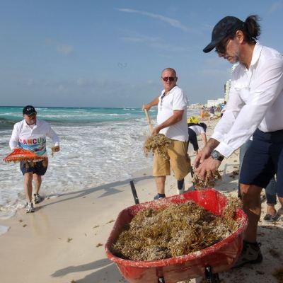 Científicos y académicos estudian los efectos del sargazo en Quintana Roo