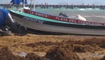 Sargazo invade costas de Quintana Roo; hoteleros piden 900 mdp para limpiarlo