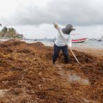 Foto: Sargazo en playas de Quintana Roo, 6 de mayo de 2019, México