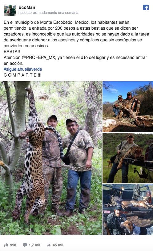 Foto Denuncian caza de felinos en peligro de extinción en Zacatecas 17 mayo 2019