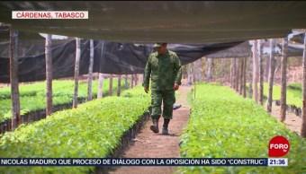 Foto: Sedena Produce Árboles Tabasco 29 Mayo 2019