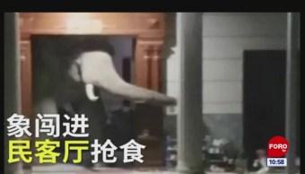 Todo Pasa en China: Se pone loco el elefante
