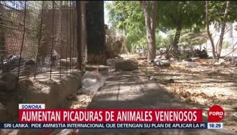 FOTO: Aumentan picaduras de insectos venenosos en Sonora