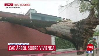 Cae árbol sobre una casa en la alcaldía Azcapotzalco