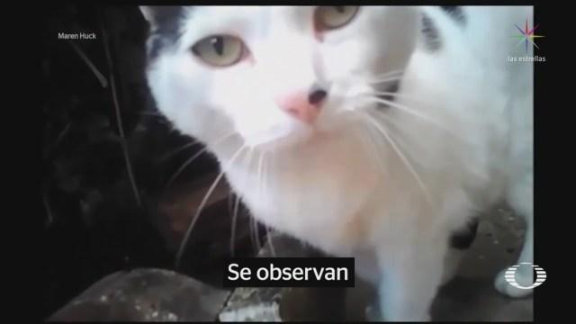 Foto: Cámaras Gatos Entender Comportamiento 3 Junio 2019