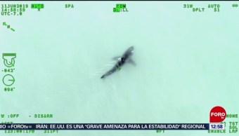 Detectan tiburón en mar de EU durante entrenamiento