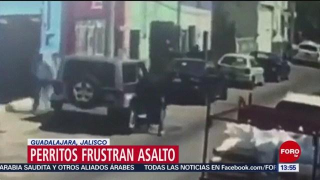 FOTO: Dos perritos frustran robo en Guadalajara