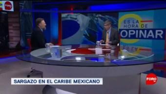 Foto: Sargazo Playas Mexicanas Problema 27 Junio 2019