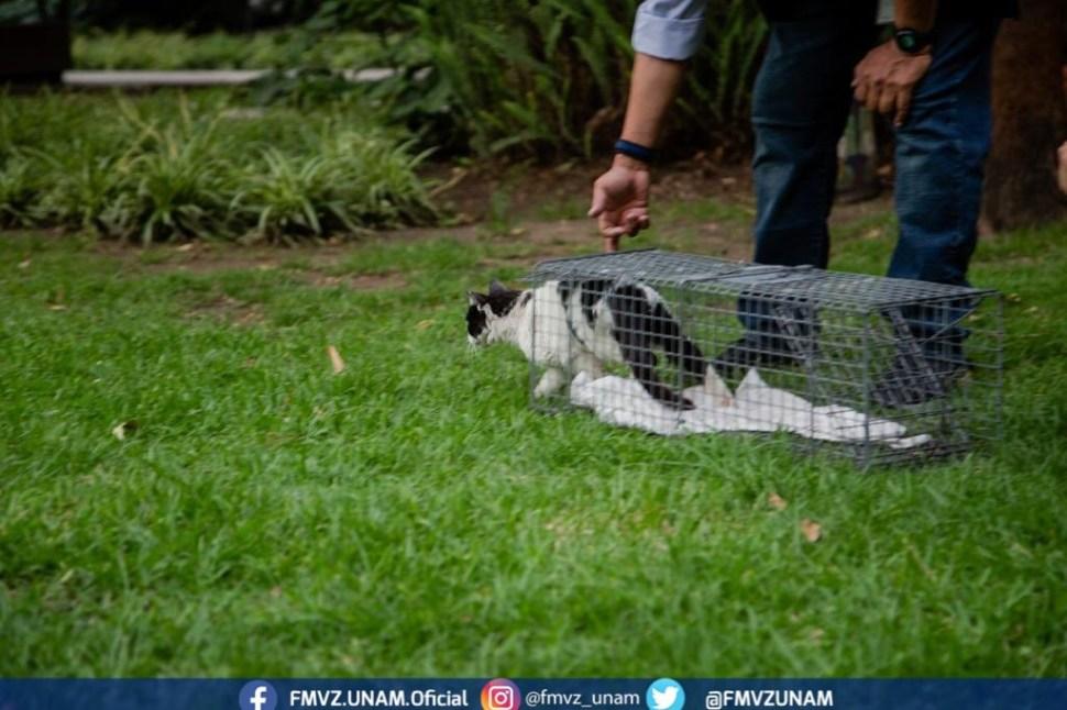 Foto Gatos de Palacio Nacional regresan tras valoración de UNAM 18 junio 2019