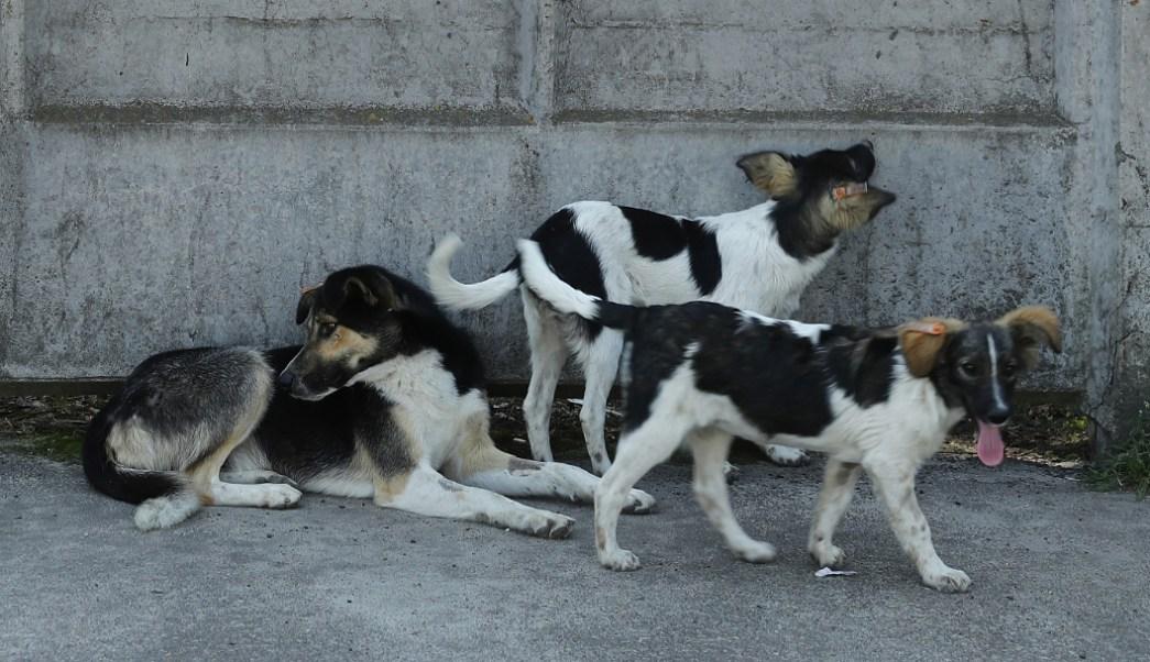 foto Denuncian envenenamiento masivo y asesinatos de perros en Zacatecas 11 junio 2019