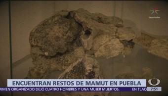Hallan osamentas de mamut en Puebla